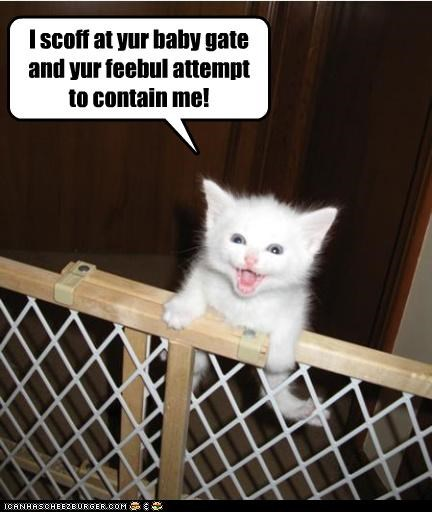 caption climbing containment feeble attempt kitten scoff - 3893923584