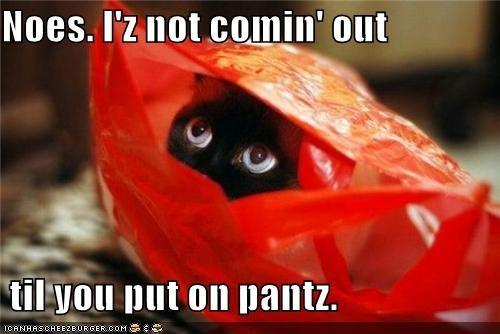 au natural bag caption cat hiding pants Protest scared - 3894373632