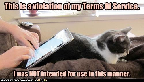 angry caption cat intended purpose terms of service use violation - 3894514432