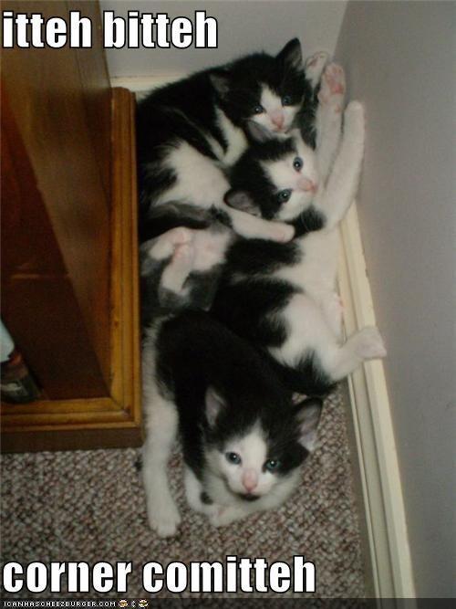 caption,corner,cramped,cuddling,itteh bitteh kitteh committeh,kitten