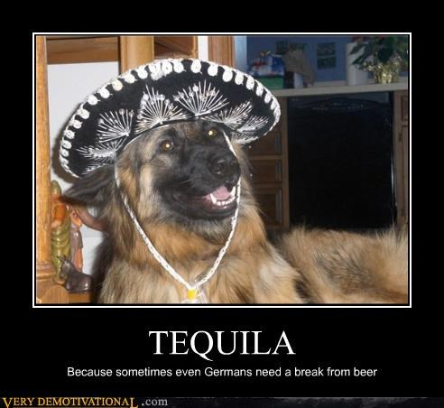 german shepherd,booze,tequila,dogs
