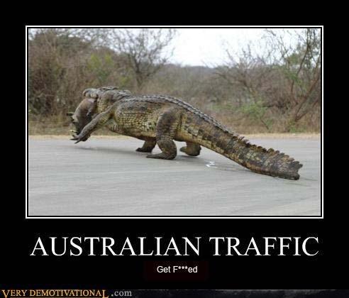 australia crocodile out back reptiles scary Terrifying traffic - 3894992896