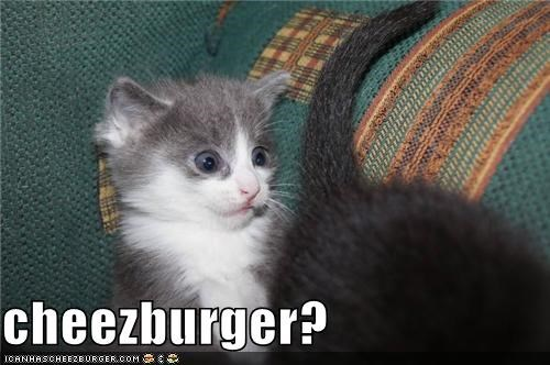 Cheezburger Image 3895053312