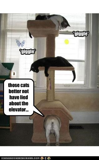 *giggle* *giggle* *giggle* those cats better not have lied about the elevator...