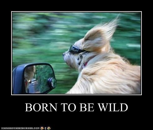 born to be wild car goggles Hall of Fame speed whatbreed wind