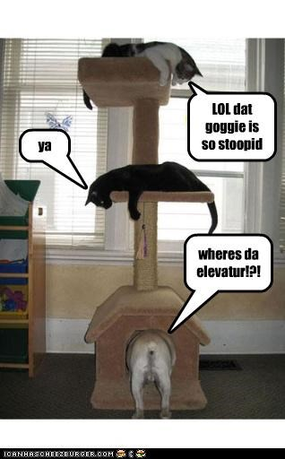 LOL dat goggie is so stoopid ya wheres da elevatur!?!