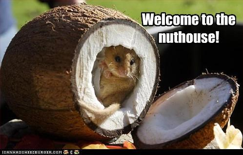 caption,coconut,rat,the nuthouse,welcome