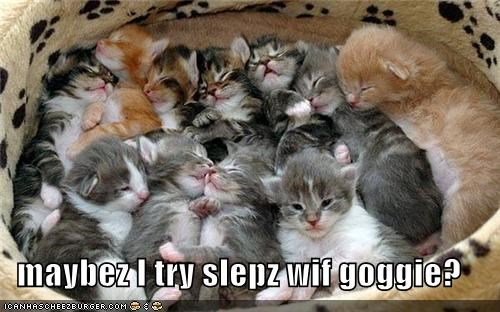 caption,crowded,goggie,kitten,sleep,something new,trying