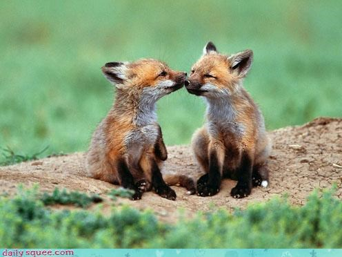 beautiful,compliment,cubs,fox,foxes,foxy,friends,friendship,kissing,love,pun