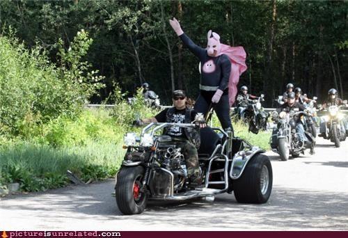 biker costume crazy pig sturgis wtf - 3897268992