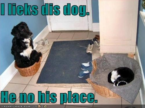border collie,cat,cat bed,dog bed,like,switch