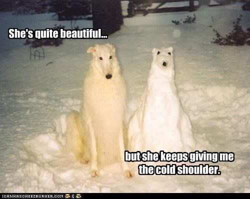 beautiful,borzoi,cold shoulder,Hall of Fame,love,pun,snowdog