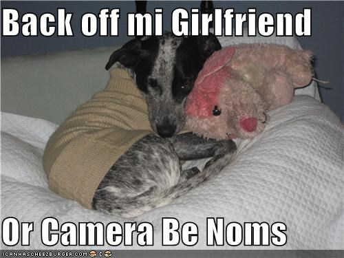 australian cattle dog,back off,camera,girlfriend,noms,puppy