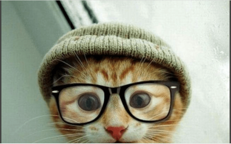 a funny list of cats and dogs dressed as hipsters