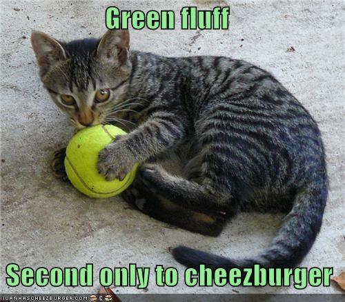 Cheezburger Image 3898204672