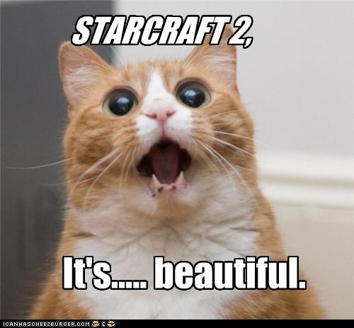 awe beautiful caption cat excited starcraft 2 - 3898219520