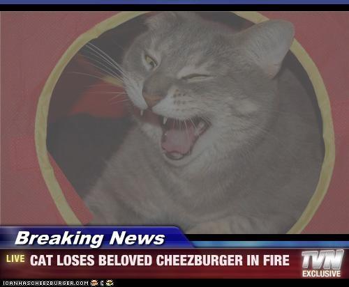 Cheezburger Image 3898281472