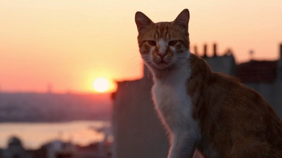 best cat documentaries