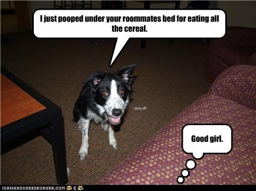 I just pooped under your roommates bed for eating all the cereal. Good girl.