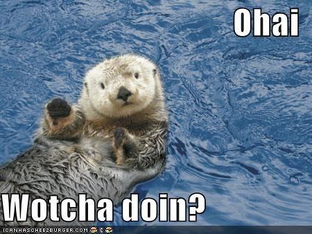 Ohai  Wotcha doin?