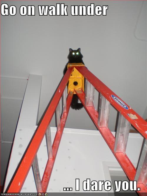 black caption cat dare ladder superstition - 3899125504