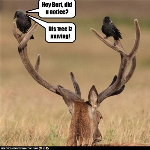 birds,caption,captioned,deer,did you notice,moving,surprise,tree