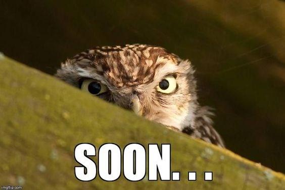 a funny list of owl memes