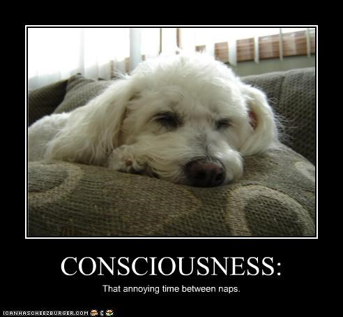 CONSCIOUSNESS: That annoying time between naps.