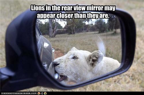 Lions in the rear view mirror may appear closer than they are.