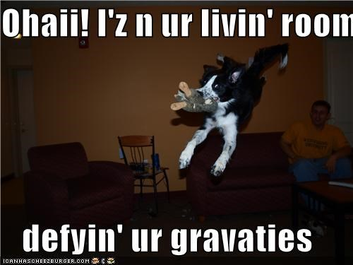 Ohaii! I'z n ur livin' room defyin' ur gravaties