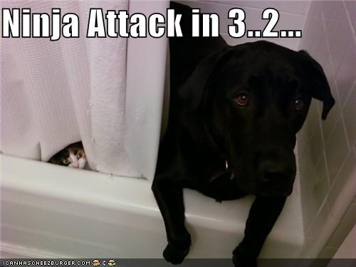 attack,cat,countdown,Hall of Fame,ninja,shower,stealth
