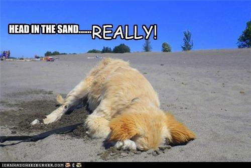 HEAD IN THE SAND....... REALLY!