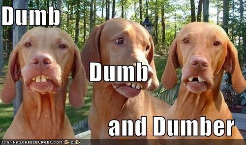 goggie,buckteeth,dogs,dumb,herp,derp