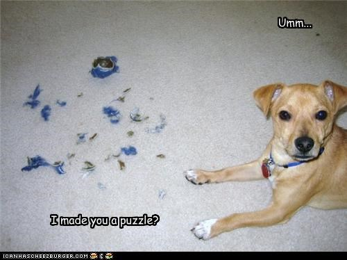 ball excuses puppy puzzle shredded whatbreed - 3902752256