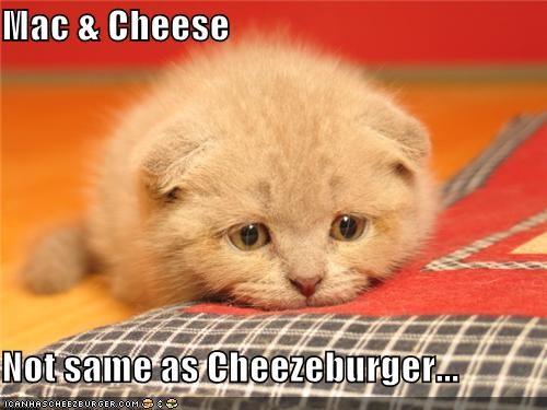 Cheezburger Image 3902917632