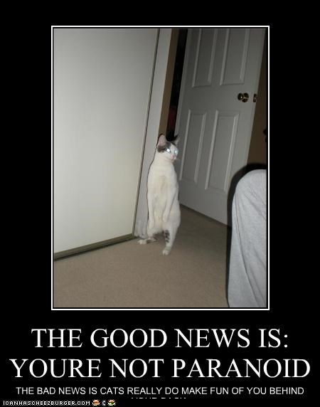 THE GOOD NEWS IS: YOURE NOT PARANOID THE BAD NEWS IS CATS REALLY DO MAKE FUN OF YOU BEHIND YOUR BACK.