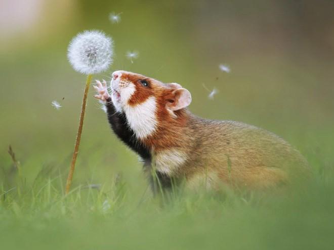 wild hamster life