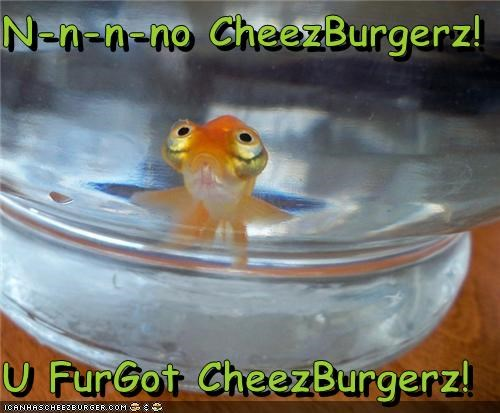 Cheezburger Image 3903789568