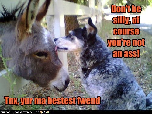 bestest friends donkey friendship Hall of Fame licking reassuring whatbreed - 3903894784