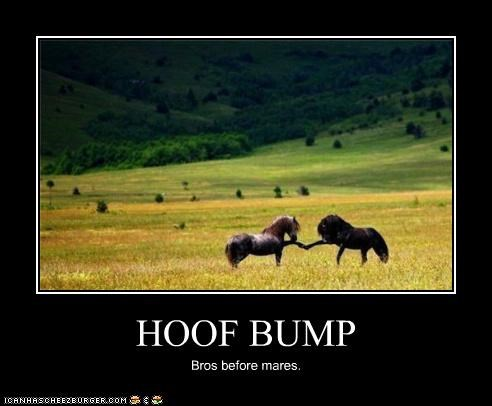 bros,caption,hoof bump,hooves,horses,mares