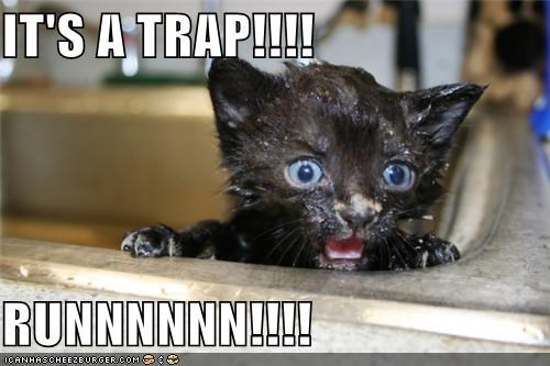 bath,caption,kitten,run,sink,trap,warning,wet