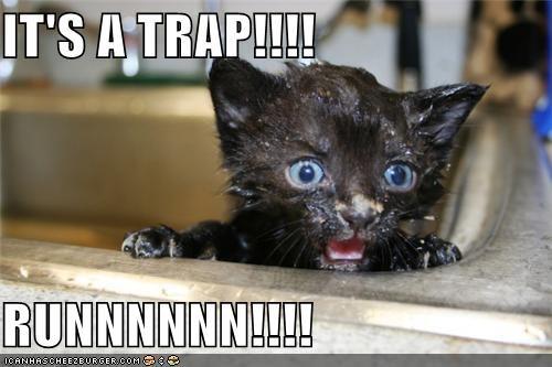bath caption kitten run sink trap warning wet - 3904137984