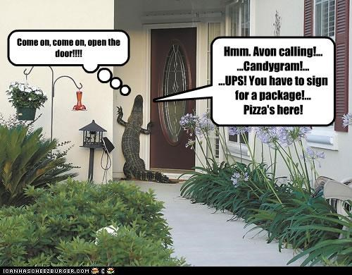 Hmm. Avon calling!... ...Candygram!... ...UPS! You have to sign for a package!... Pizza's here! Come on, come on, open the door!!!!