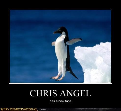 new face,Chris Angel,penguin