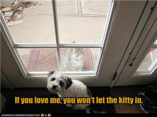 If you love me, you won't let the kitty in.