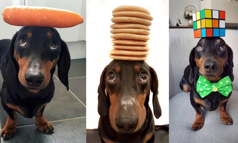 dog with an unusual balancing ability