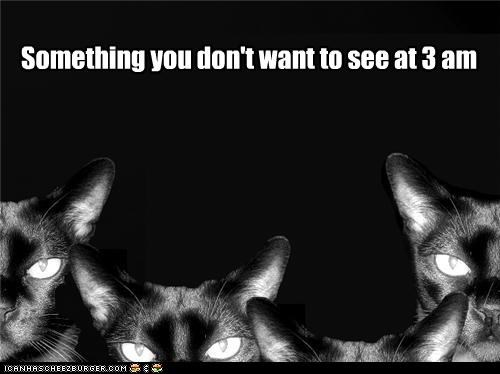 3 am black and white caption captioned cat Cats do not want nightmare nightmarish see something - 3906244096