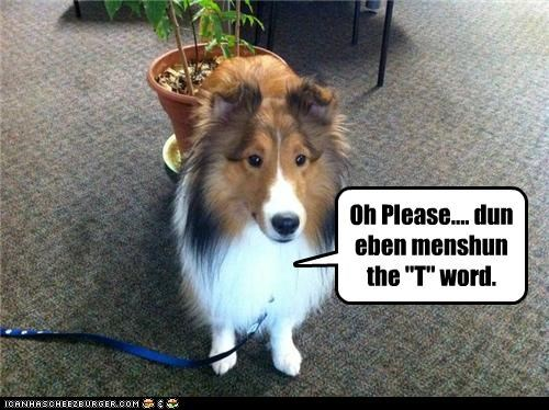 collie dont lassie mention please the t word timmy - 3906964480