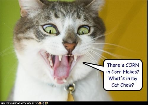 caption captioned cat cat chow contents corn corn flakes epiphany freaked out ingredients noms question realization what - 3907146496