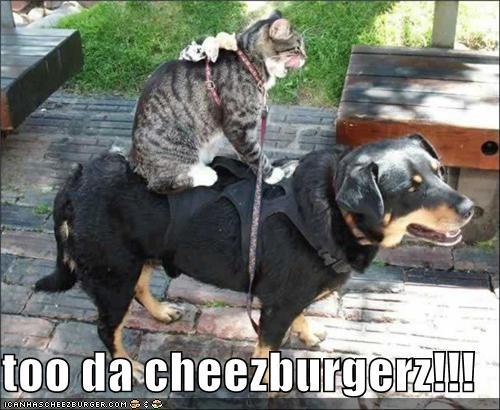 Cheezburger Image 3907189248